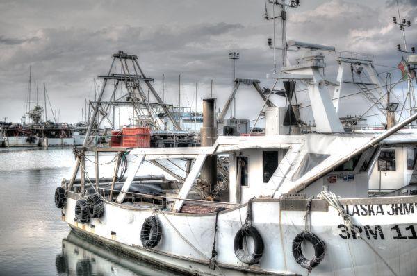 Cattolica harbor photo