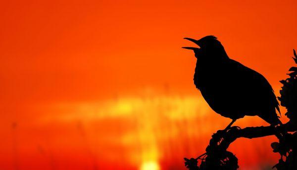 Silhouette Bird Perching on Orange Sunset photo