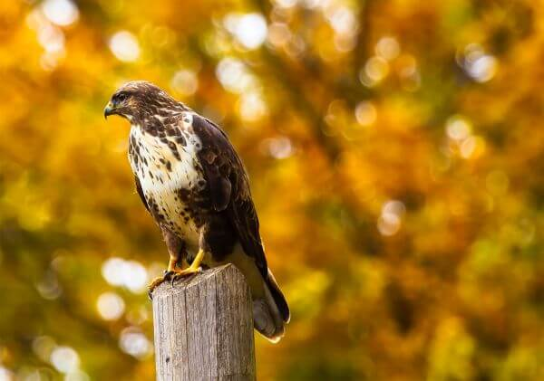 Eagle Perching on Outdoors photo