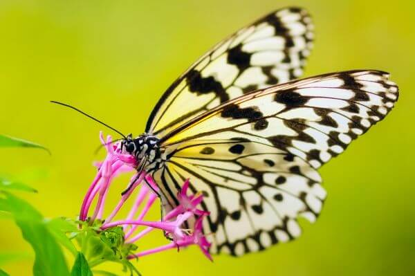 Butterfly Pollinating Flower photo
