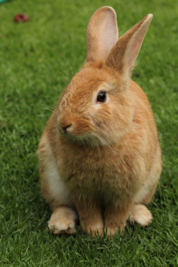 Rabbit on Field photo