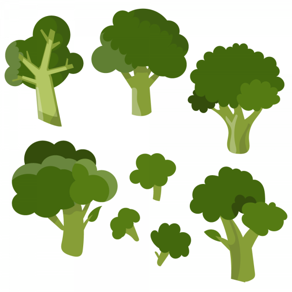 Fresh broccoli vector set vector