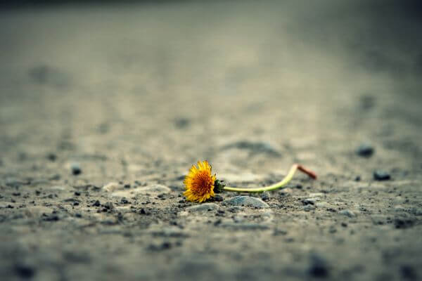 Flower on Sand photo