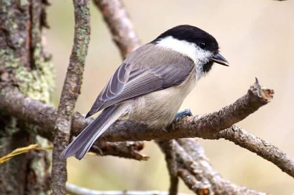 Bird Perching Outdoors photo