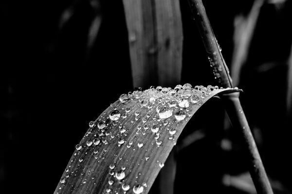 After the rain photo