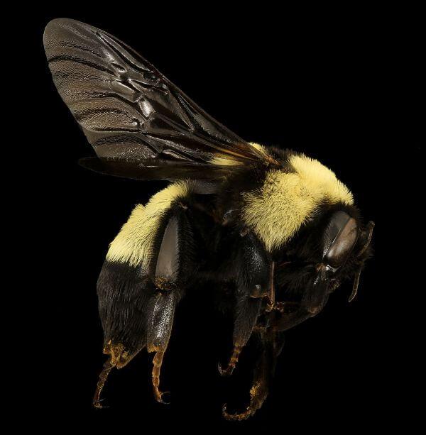 Bee photo