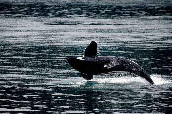 Aquatic photo