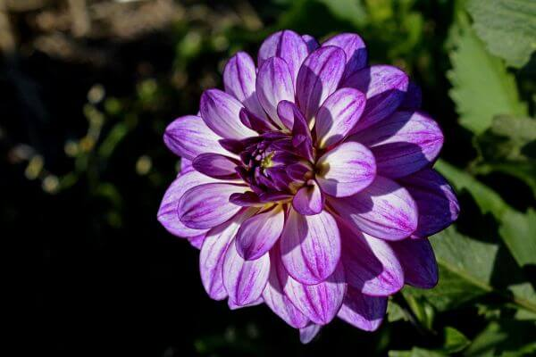 Asteraceae photo