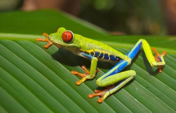 Amphibian photo
