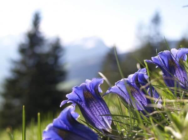 Bell flower photo