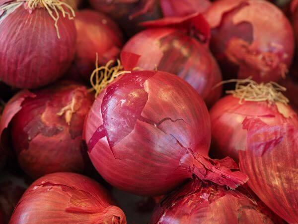 Bulb onion photo