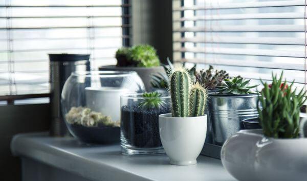Cacti photo