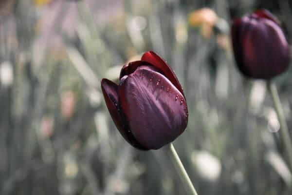 Flora photo