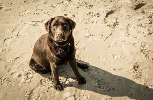 Sandy dog photo
