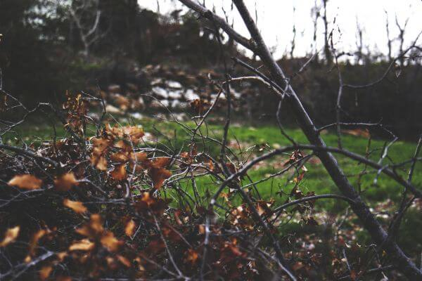 Branches photo