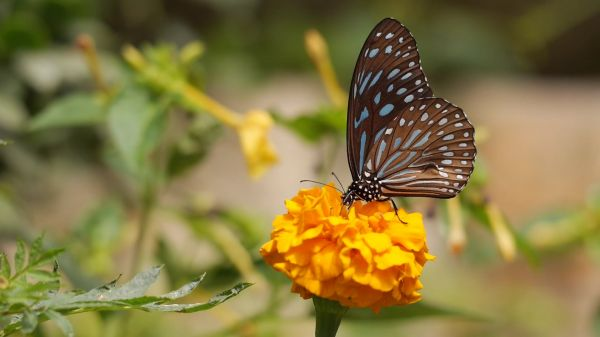 Butterfly  botany  flower video