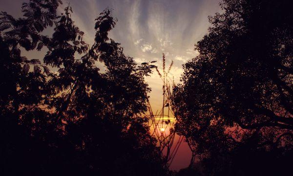 Backlit photo