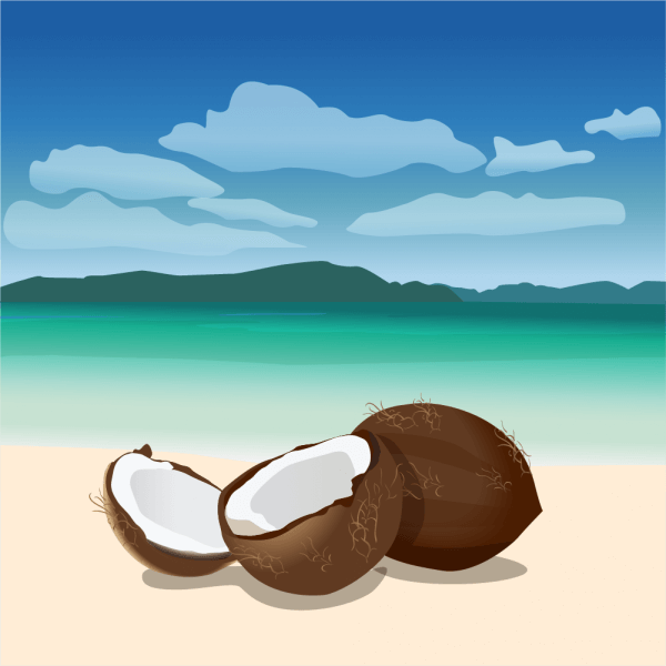 Coconuts vector