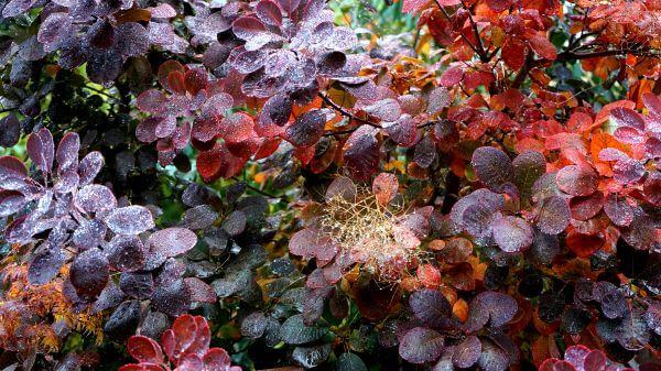 Botanical photo