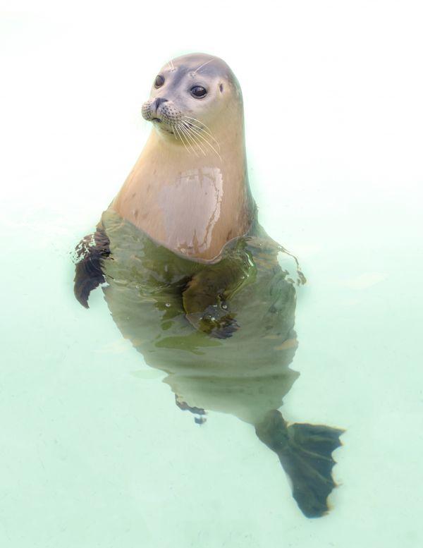 Seal posing photo