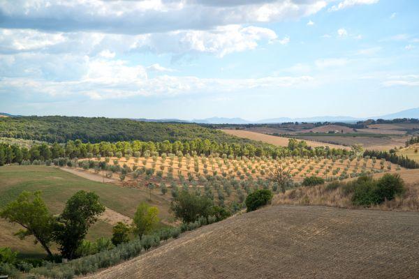 Tuscan patchwork photo