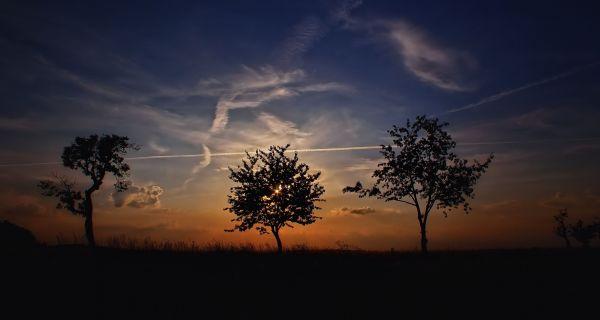 Sunset Trees Dusk photo