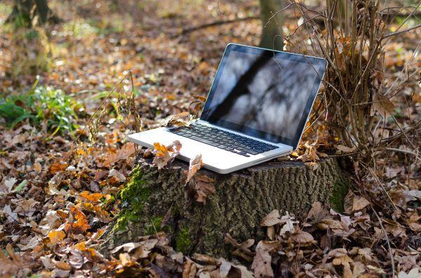Laptop Tree Leaves Autumn Fall photo