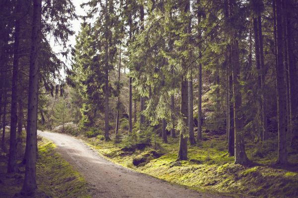 Woods Outdoors Trees Trail Forest photo