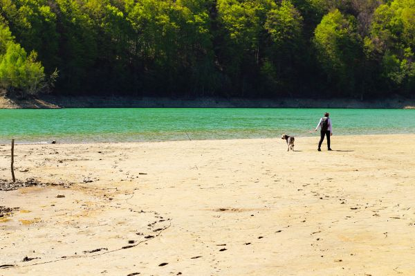 Man Walking Dog Beach Lake Water photo