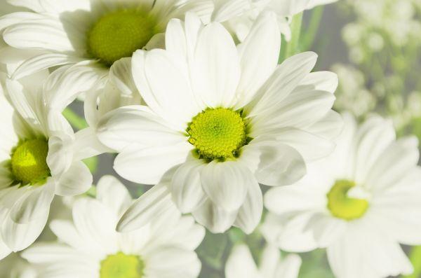 Flower Plants White Yellow photo