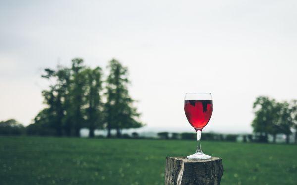Glass Red Wine Grass Tree photo