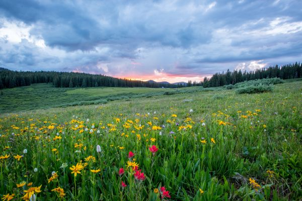 Flowers Color Forest Clouds photo