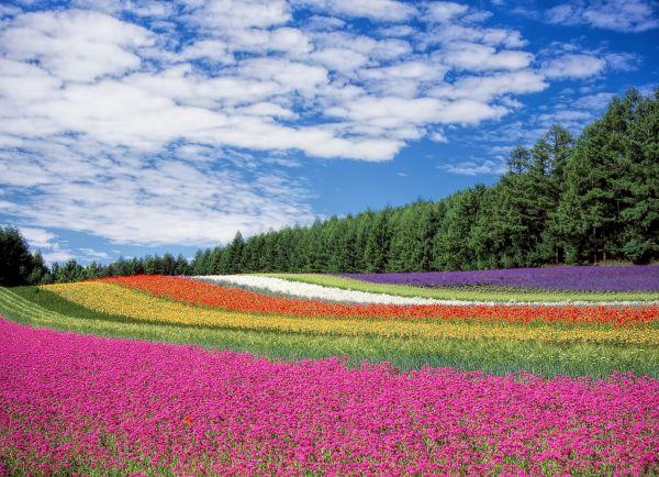 Field Color Blue Sky photo