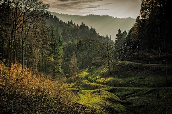 Black Forest Dawn photo