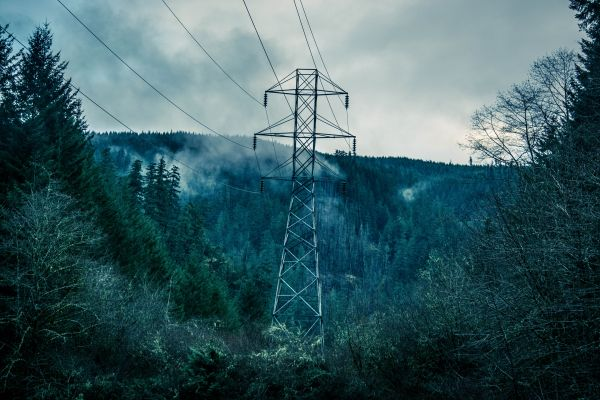 Power Lines Forest Trees photo