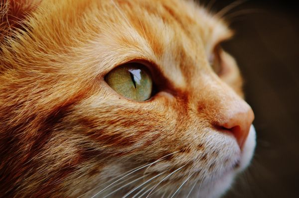 Closeup Cat photo