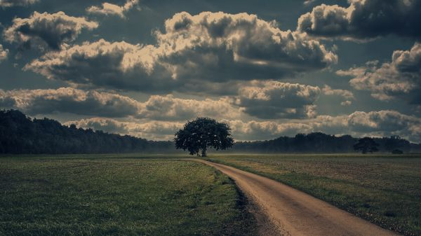 Storm Clouds Tree photo