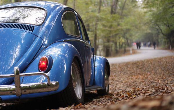 Blue Volkswagen Beetle Forest photo