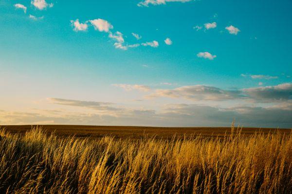 Blue Sky Farm Field Summer photo