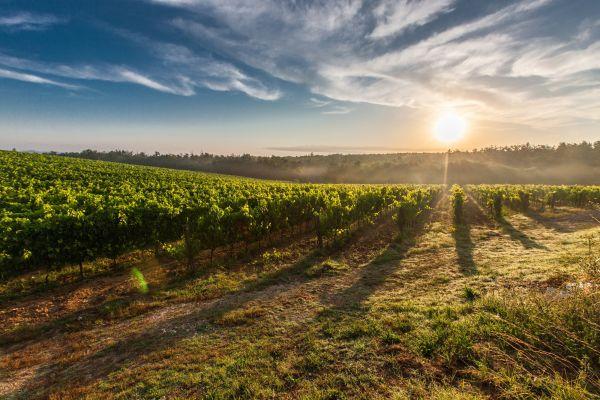 Tuscany Vineyards Sunset photo