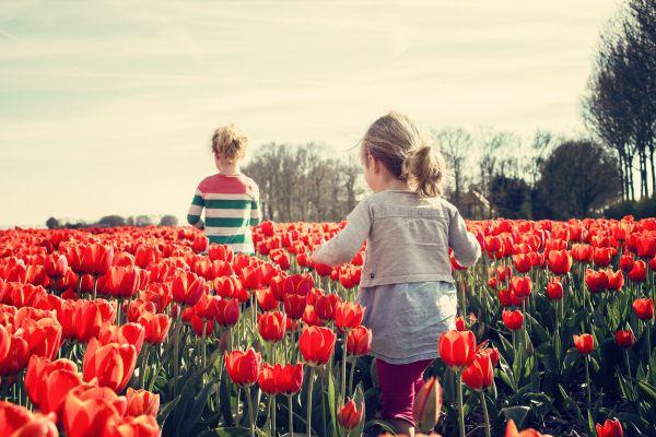 Children Red Tulips Garden Field photo