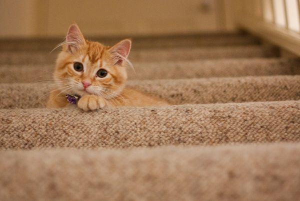 Ginger Tabby Cat Staircase photo