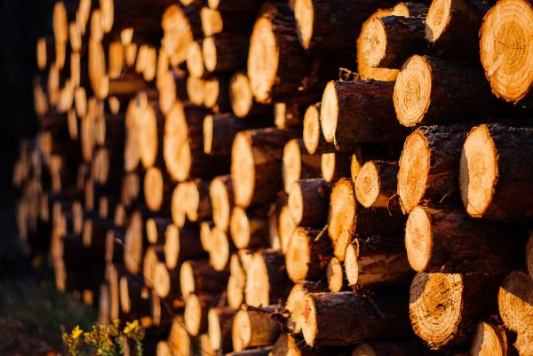Wood Logs Forest photo