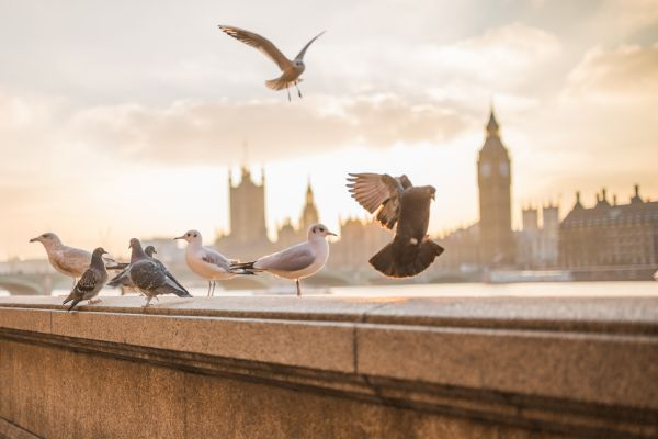 Flying Birds in London photo