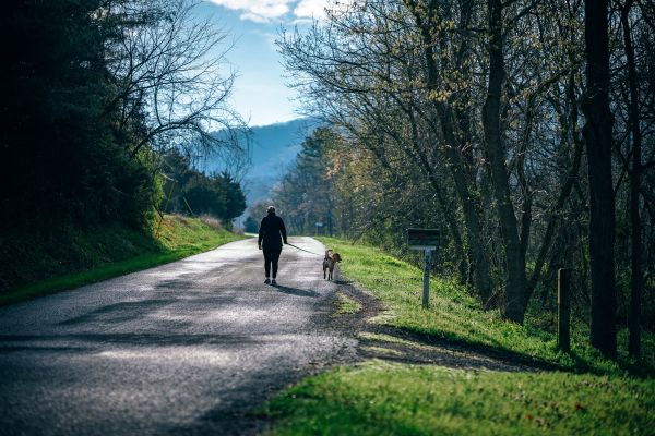 Woman Walking Dog Road Forest photo