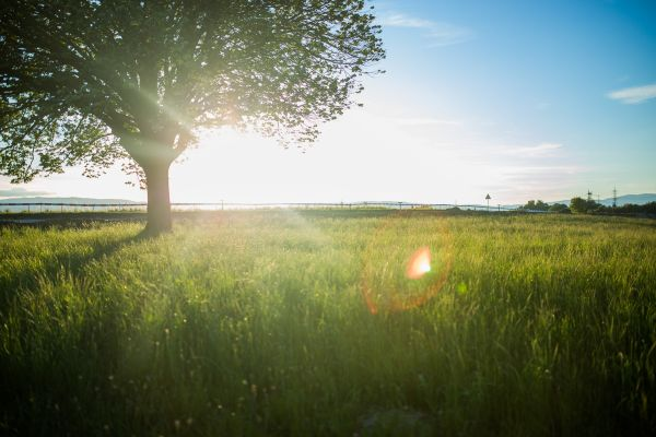 Sun Rays Tree Field photo