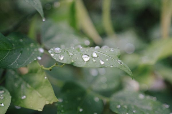 Rain Drops Green Leaf photo