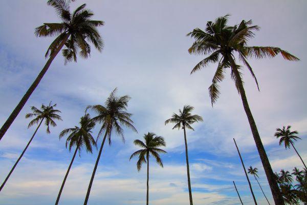 Palm Trees Blue Sky photo