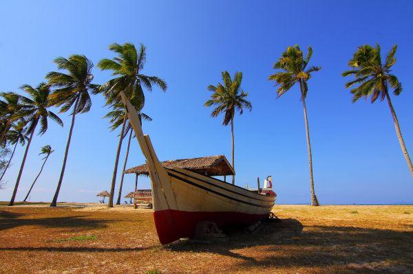 Palm Trees Blue Sky Boat photo