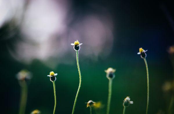 Flowers Growing Garden photo